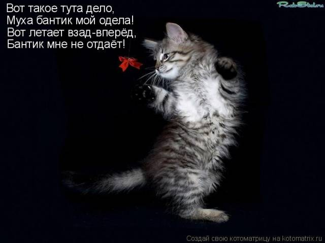 http://galinataravkova.ucoz.ru/_pu/8/s91793166.jpg